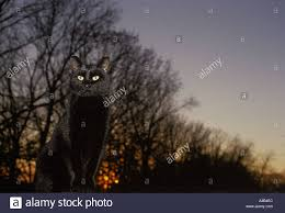 halloween black cat with yellow glowing eyes sitting on a fence
