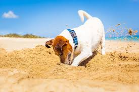 how to stop dogs from digging eat sleep walk