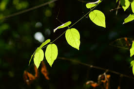 free images tree nature branch light glowing leaf flower