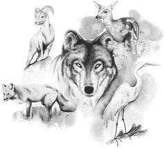 animal drawings online drawing showcase