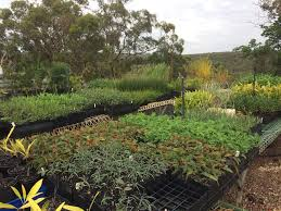 native plant nursery terrey hills waratah eco works u2013 restoration ecology u0026 environmental management