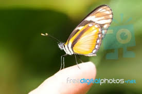 butterfly on a finger stock photo royalty free image id 100185922