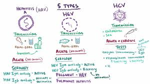 overview of acute viral hepatitis hepatic and biliary disorders