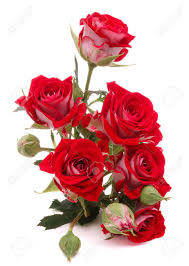 flower images red rose flower bouquet isolated on white background cutout stock