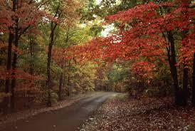 fall colors natchez trace parkway national park service