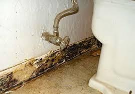 How To Remove Bathroom Mold Bathroom Mold How To Prevent And Remove Bathroom Mold
