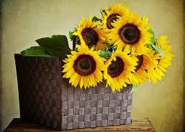 foto wallpaper bunga matahari wallpaper daun daun ilustrasi dinding meja kuning bunga