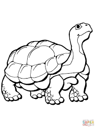 tortoise coloring page realistic gopher tortoise coloring page