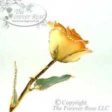The Forever Rose White To Orange Gold Tipped Rose