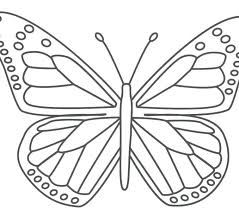 coloring pictures of small butterflies butterfly coloring pages print butterfly coloring pages to print