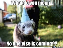 Ferret Meme - ferret memes best collection of funny ferret pictures