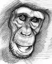 a monkey sketch 1998 u2026 inc1979