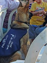 Dogs For The Blind Jobs Guide Dog Wikipedia