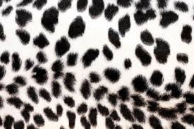 leopard print bedroom decor shia labeouf biz clip art library black and white zebra print wallpaper widescreen hd wallpapers