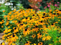 10 Best Perennials And Flowers by What Is A Perennial Diy