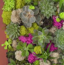 how to make a succulent wall garden in a picture frame