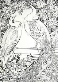 drawn peafowl coloring page pencil and in color drawn peafowl