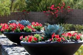 18 cactus garden planter design unique succulent driftwood