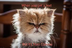 Meme Monday - meme monday 2 the sagamore
