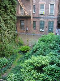 City Backyard My New York City Page Photo Gallery And Videos