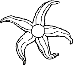 amazing starfish coloring page alphabrainsz net