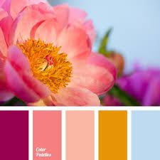 Warm Orange Color Warm Orange Color Palette Ideas