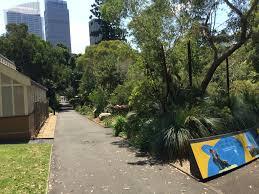 sydney native plants cadi jam ora first encounters australian native garden display