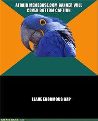 Parrot Meme - memes paranoid parrot image memes at relatably com