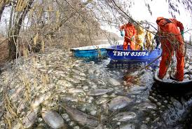 Challenge Herpes Snopes Should We Release The Deadly Carp Virus Into Our Rivers And Water