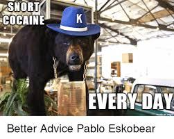 Bear Cocaine Meme - cocaine cocaine bear every day on imqu better advice pablo