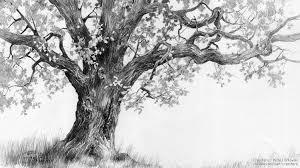 oak tree tutorial by micorl on deviantart