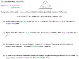 hardy weinberg practice problems worksheet with answers the best