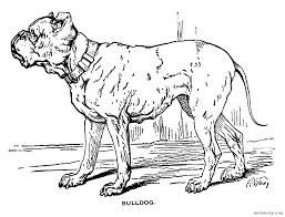 bulldog coloring page miss mary u0027s gazette