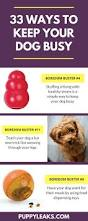 33 simple ways to keep your dog busy indoors puppy leaks