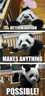 Level Meme - determination level panda memes quickmeme
