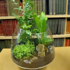 Tropical Plant Biology - best 25 tropical terrariums ideas on pinterest diy gifts how to