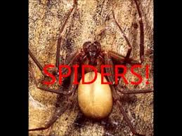 How To Keep Spiders Out Of Your Bed Keep Spiders Bed Bugs Fleas And Ticks Out Of Your Bed Youtube