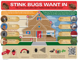 Massachusetts how do bed bugs travel images Stink bugs brown marmorated stink bug control prevention jpg