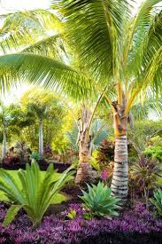 Modern Front Yard Desert Landscaping With Palm Tree And Best 25 Palm Trees Landscaping Ideas On Pinterest Potted Palms