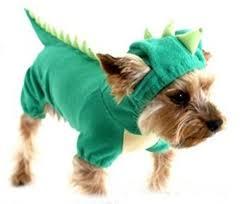 Halloween Costumes Small Dogs Dino Doggy Schnauzer U003c3 Jasper Dog Costumes