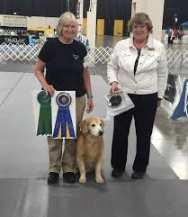 who won the dog show on thanksgiving detroit kennel club dog shows home facebook