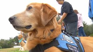 Comfort Retrievers These Dogs Are Helping Sutherland Springs Cope With Tragedy