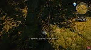 wild hunt witcher 3 werewolf wild at heart witcher 3