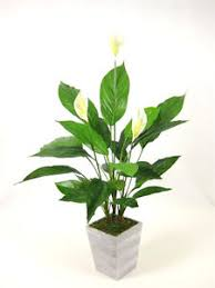 peace lilly 65cm potted silk artificial flower peace plant