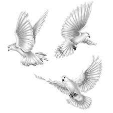 three splendid white doves tattoo design tattooimages biz