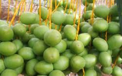 fresh dates fruit organic fresh dates india barhee yellow dates for sale dates