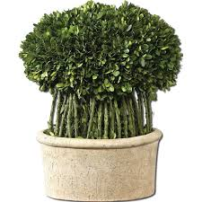 plant for home decoration decorating preserved boxwood wreath in o design with red ribbon