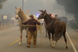 California Flag Horse As Creek Fire Rages Valley Horse Owners Scramble To Get Their