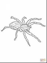 awesome cute spider coloring page with spider coloring pages