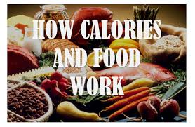 science diet light calories science time how calories and food work